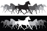 White and black Trotting horses silhouette background