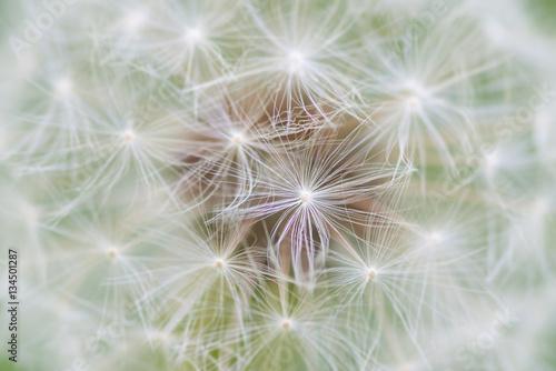 Dandelion seed abstract © bearacreative