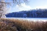 mit Raureif überzogene Bäume am Waldsee