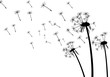 White background with dandelions. - 134518260
