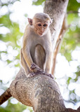 small monkey on tree