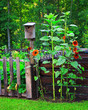 Rustic birdhouse in a country garden