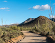 Forest of cactus in Saguaro National Park West Tucson