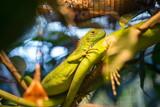 Chameleon inside a cage - Stock image