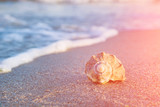 Shell on a beach in a sun light - 134567494