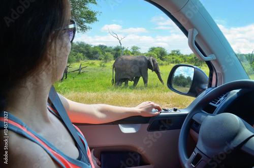 Poster Woman tourist on safari car vacation in South Africa, looking at elephant in sav