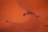 Camel caravan in the Sahara