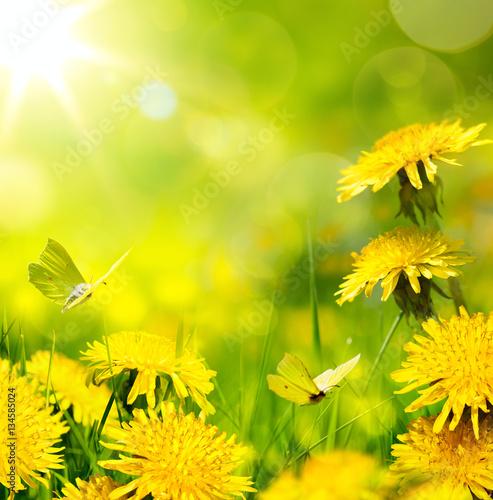 art spring flower background; fresh flower on green grass backgr - 134585024