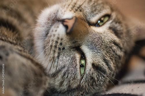 Poster Katze mit grünen Augen
