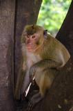 faune en thaïlande