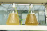 algae research process in laboratory
