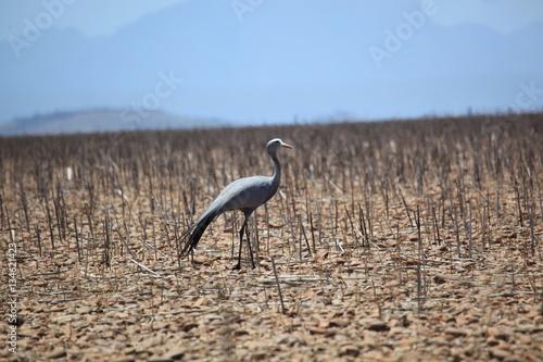 Poster Vogel Südafrika