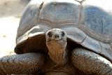 Seychellen - Riesenschildkröte