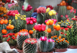Mix of beautiful cactuses
