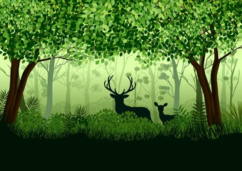 Green forest with wild elk in forest