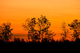 Silhouette of big tree at sunset