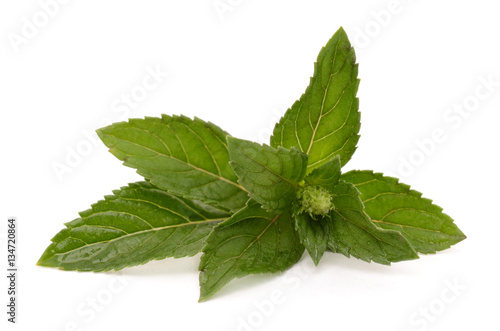 Poster Mint leaves