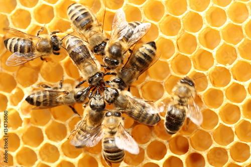 Aluminium Bee Bienenkreis