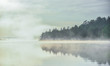Fog and mist rises all around, partially enshrouding a waterfront deciduous Eastern Ontario forest at a lakeside.