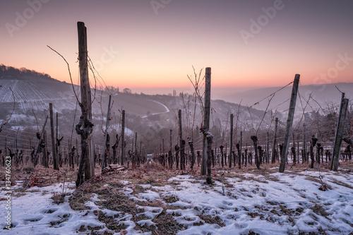 Poster Winter mit Schnee und Dämmerung im Weinberg