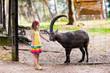 Постер, плакат: Little girl feeding wild goat at the zoo