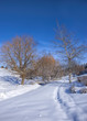 Snow covered park and blue sky in Moscow, Idaho.