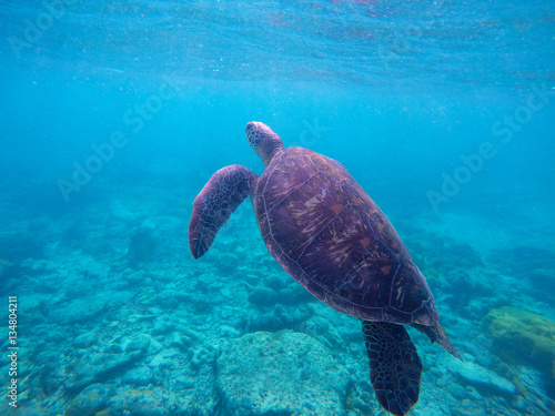 Poster Underwater photo with sea turtle with text place