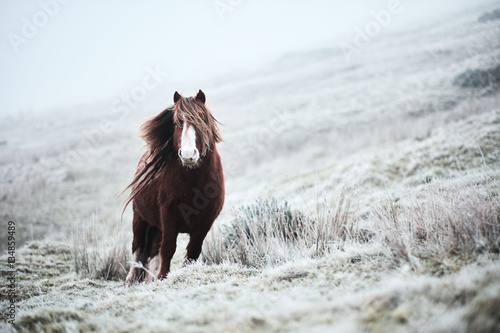 Poster wild horse in a frosty day on top of a mountain