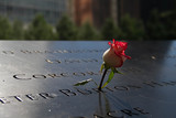 rose in the dark shade and blurred background at the 911 memorial world trade center, New York - 134861202