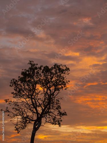 Papiers peints Orange eclat Golden Mixed Grey Clouds and Tree silhouette