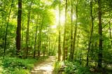 Einladung zum Entspannen und Träumen: Wald im Frühling mit Morgensonne :) - 134944870