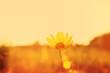 Autumn grass and wildflower background. instagram effect.