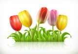 Tulips flowers and spring grass, 3d vector icon