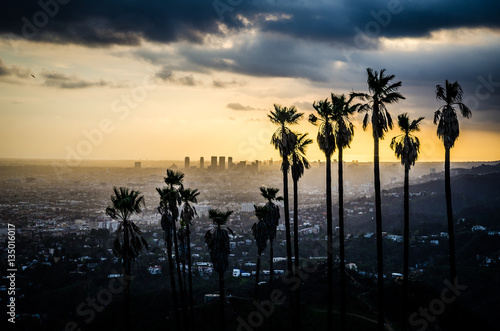 Poster Palms Silhouetted against Hollywood