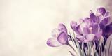 Vintage Spring Crocus Flowers - 135045249