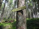 Wegweiser an Wanderweg nach Schonach, Schwarzwald, Baden-Wuerttemberg, Deutschland