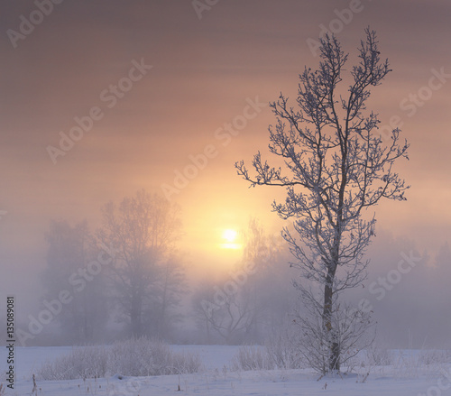 Foto op Plexiglas Zalm Frosty winter morning