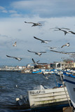 Bulgaria, a small fishing town Pomorie, in April 2016, fishing boats on the shore.