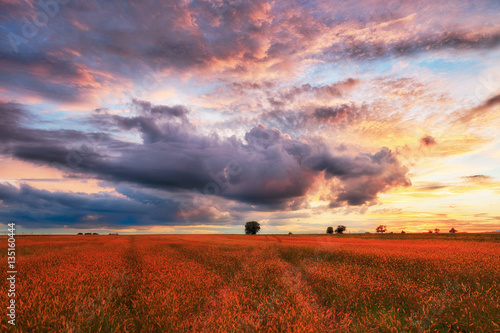 Landscape, sunny dawn in a field and meadow