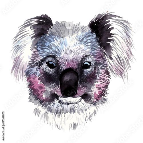 Watercolor vector koala - 135164809