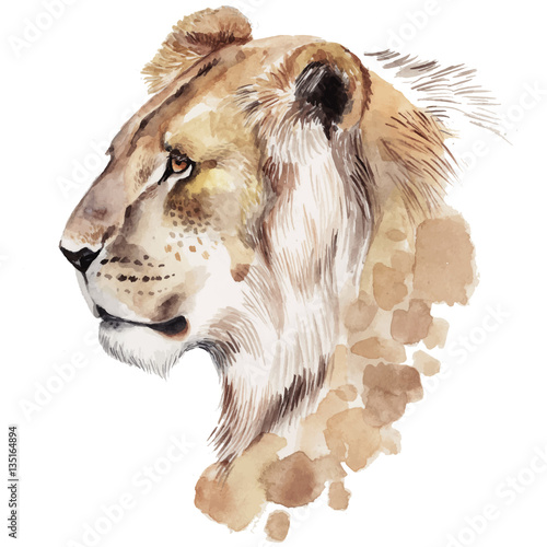 Watercolor lion portrait. Hand drawn animal illustration - 135164894