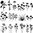 Botany set