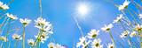 Frühlingserwachen: Meditation, Relaxen in Blumenwiese mit leuchtend schönen Margeriten :)  - 135174655