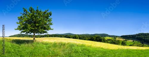 Poster Landschappen Landschaft mit grüner Wiese und Baum vor blauem Himmel