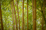 Beautiful bamboo in the park