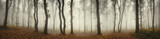 Panoramic forest landscape. Trees and fog on rainy day in natural woods panorama - 135185021