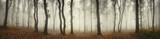 Krajobraz panoramiczny lasu. Drzewa i mgła na deszczowym dniu w naturalnej drewna panoramie
