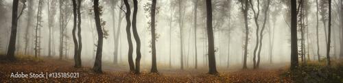Panoramiczny krajobraz lasu. Drzewa i mgła na deszczowy dzień w naturalnej lasowej panoramie
