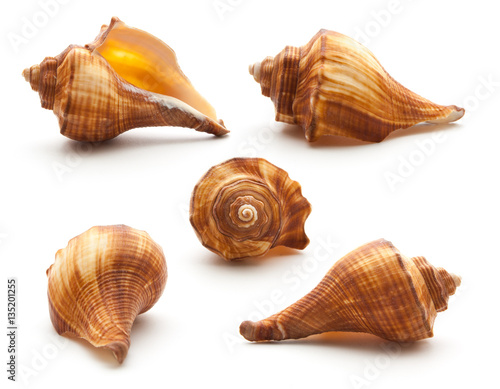 Poster Collection sea shell isolated on white