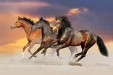 Fototapety Three bay horse run gallop in desert dust